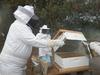 Beekeeping class smoking hive