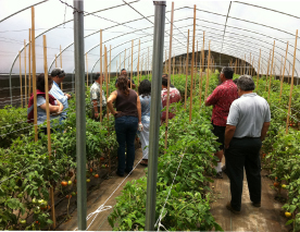 The Hodsons give the Hawaiian Home Lands staff a tour of one of 35 greenhouses on their five-acre lot.